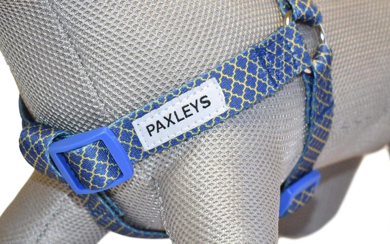 Paxleys Arnés para perro lujo dorado y azul Art Deco tamaños ...