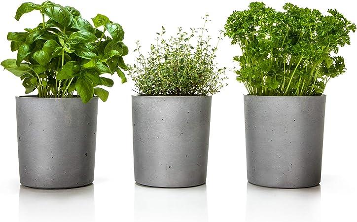 Plantes Aromatiques Spicepot Urbanature Set De 3 Cache Pots En