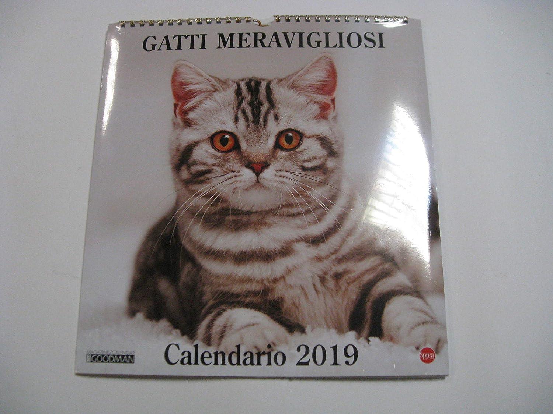 calendario 2019 gatos maravillosos de pared de Vertical f. to 30 x 27.5 cm: Amazon.es: Oficina y papelería