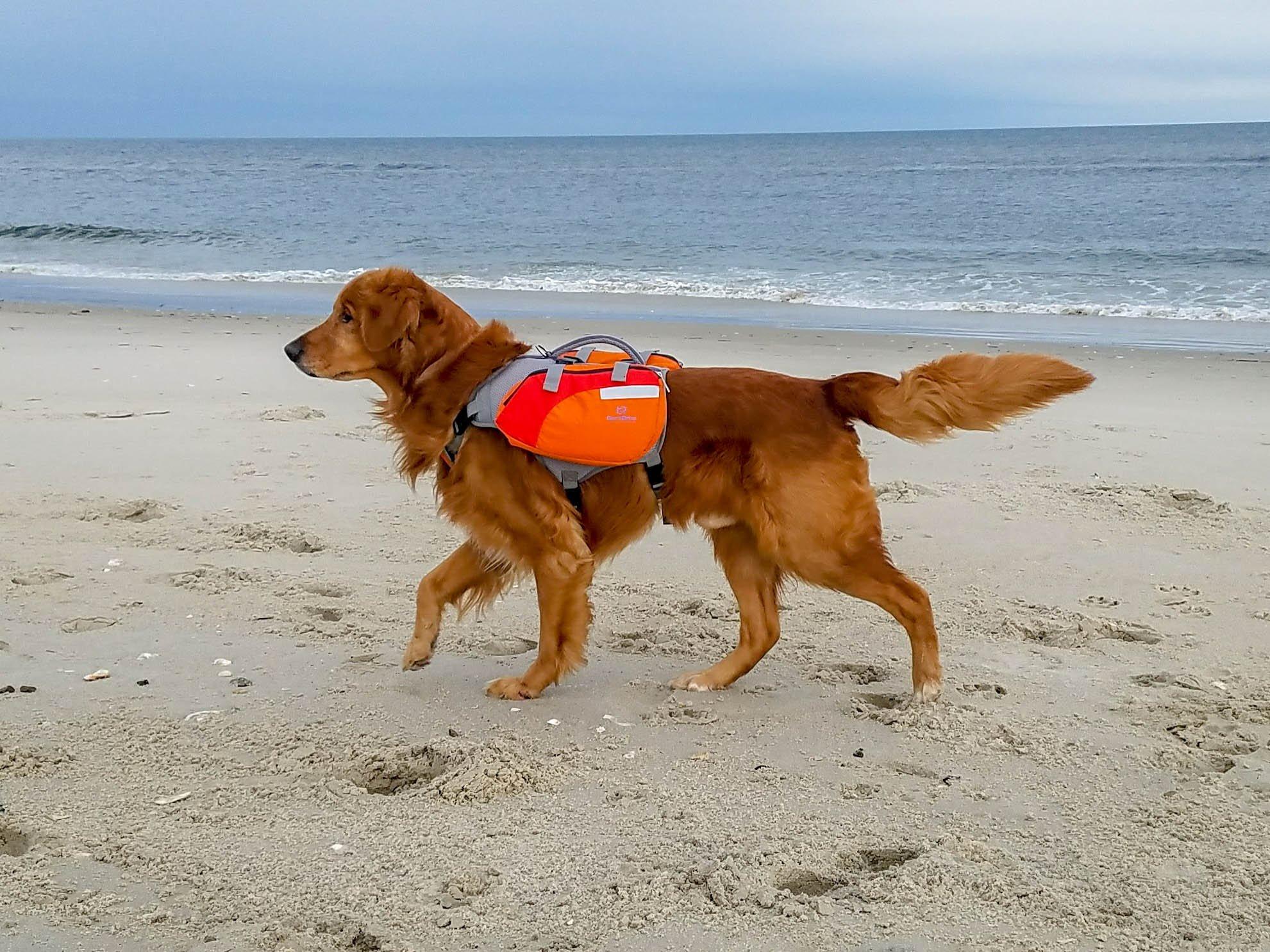 Bark Brite Multi-purpose Dog Life Jacket Backpack