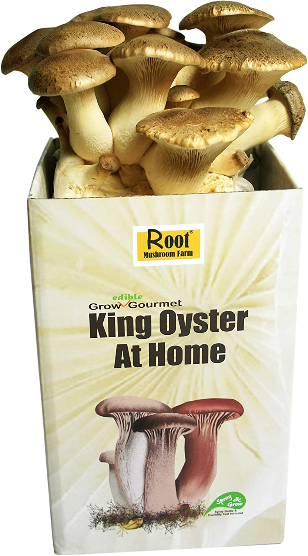 Root Mushroom Farm—King Oyster Mushroom/All in one Gourmet Mushroom Growing kit
