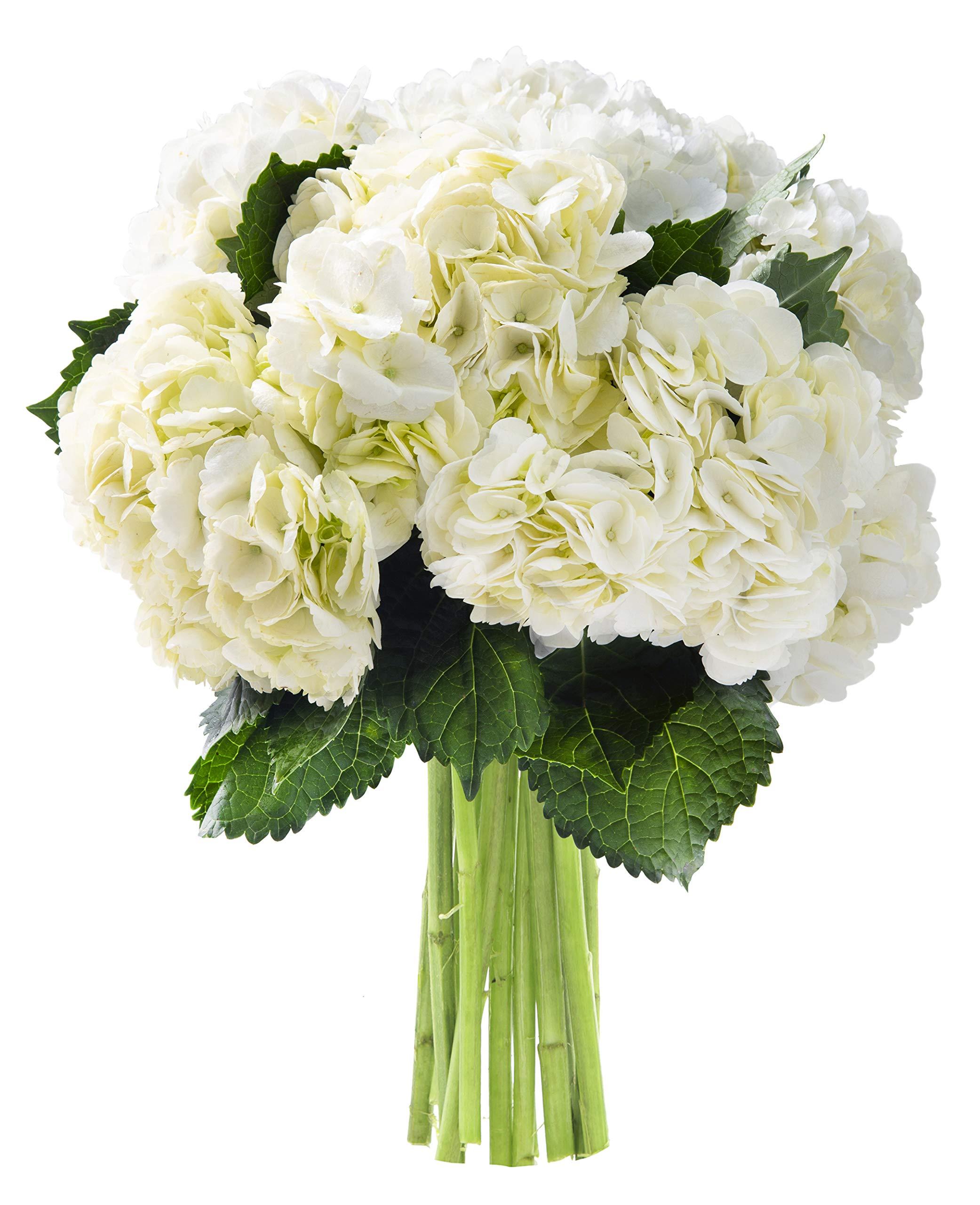 KaBloom Summer Beauty Bouquet of 6 White Hydrangeas
