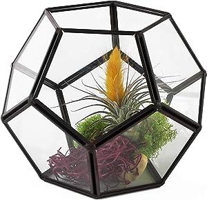 "Circleware Terraria Glass Terrarium Metal Frame Design, Home Plant Decor Flower Balcony Display Box and Best Selling Garden Gifts, 7.09"" x 5.51"", Geometric-Black-7.09x5.5"