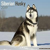 Siberian Husky Calendar 2019