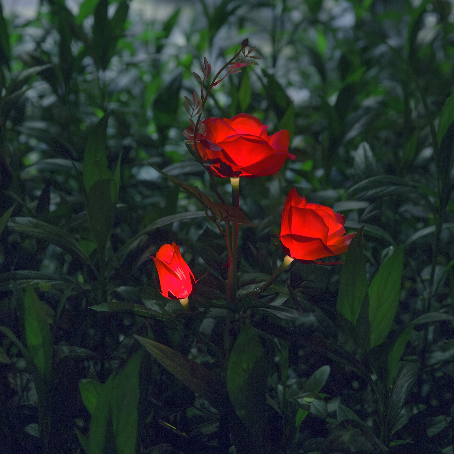 XLUX Outdoor Decorative Solar Rose LED Lights, Red