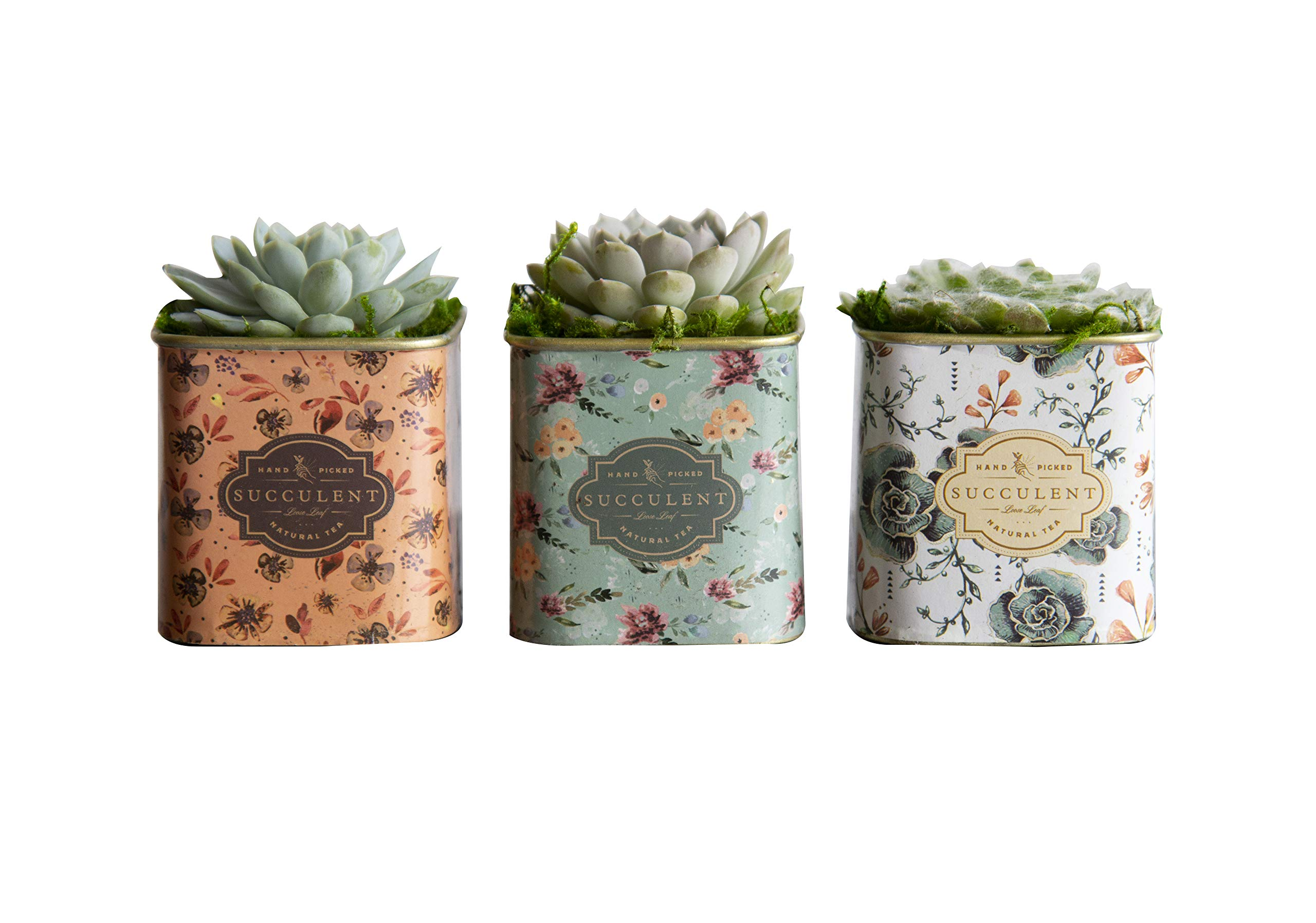Mother's Day Live Succulents In 3-Inch Floral Tea Tin Containers (Set of 3), From Hallmark Flowers