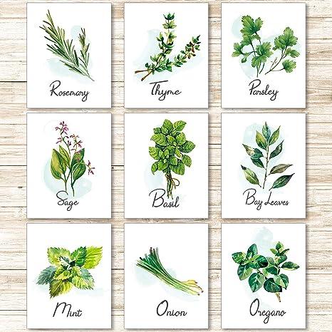 Amazon De 9 Stucke Kuche Krauter Botanisch Wand Kunst Drucke Poster Natur Blumen Pflanze Grun Kunst