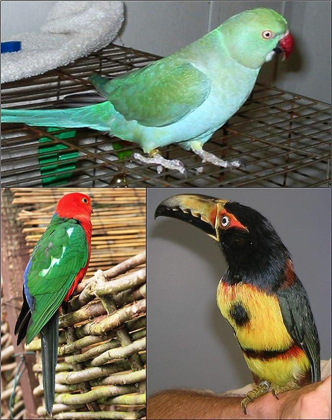 The AVIATOR El Arnés de Aves: X-Pequeña Rojo: Amazon.es: Productos ...