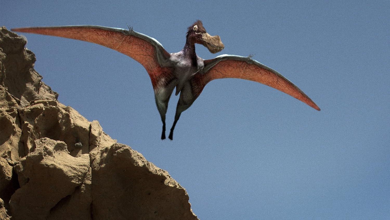 Eoraptor Dinosaur Revolution