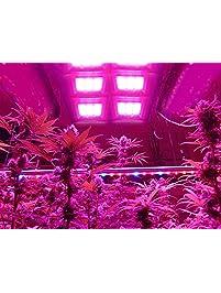 Plant Growing Light Bulbs Amazon Com