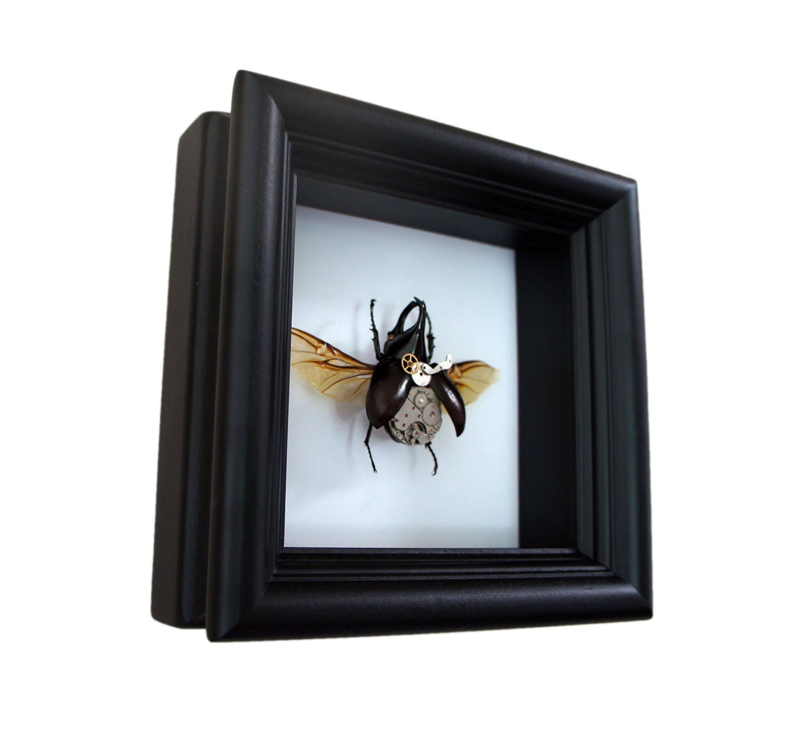 Real Steampunk Rhino Beetle Insect Taxidermy Display Shadow Box 5