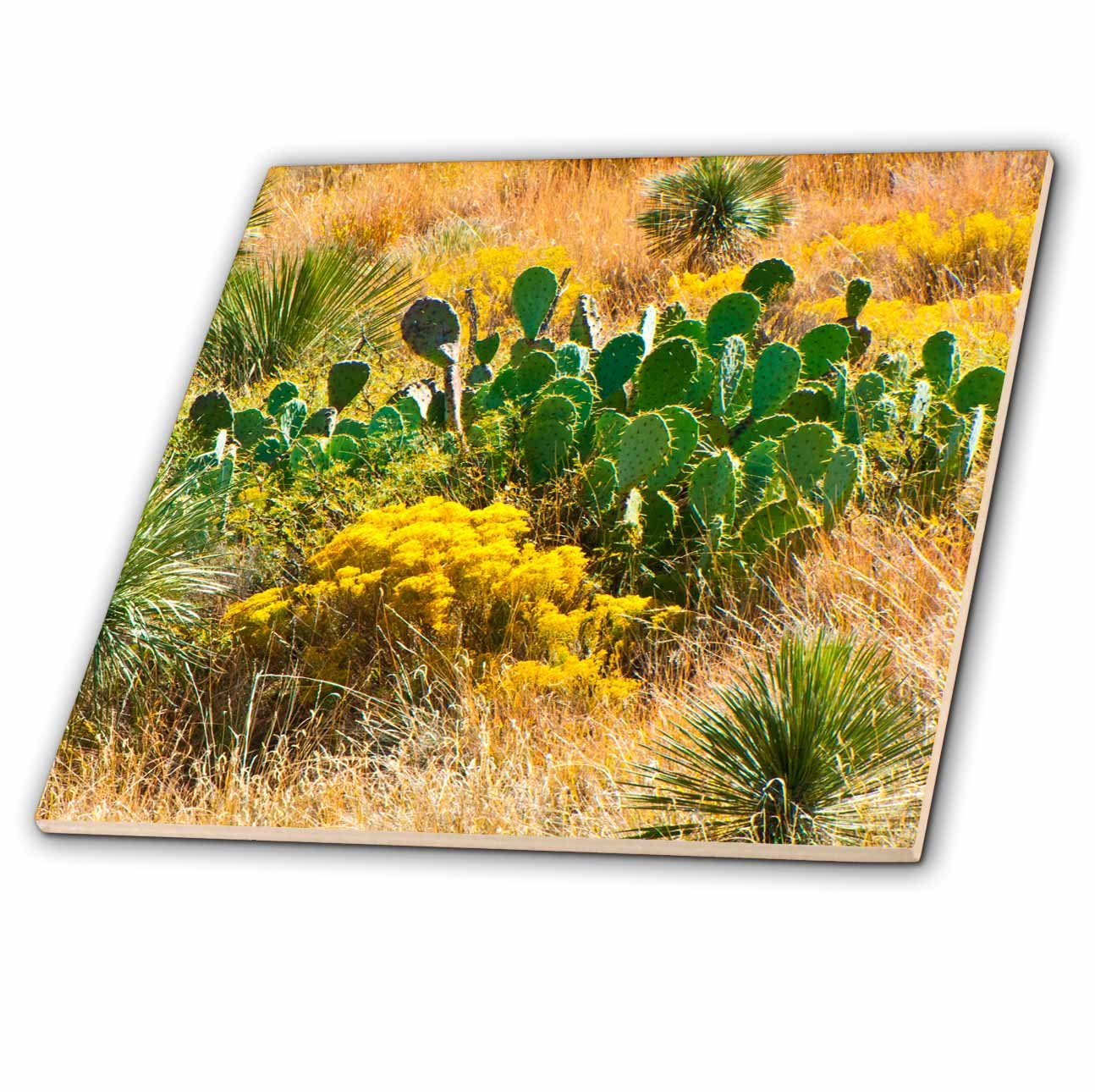 Texas 4-Inch - Ceramic Tile Guadalupe Mountain Np Prickly Pear Cactus ct/_208753/_1 3dRose USA