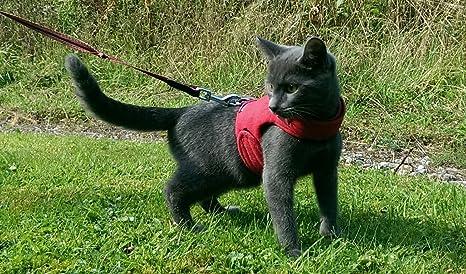 Mynwood - Arnés para Gato (hasta 8 Meses), Color Rojo