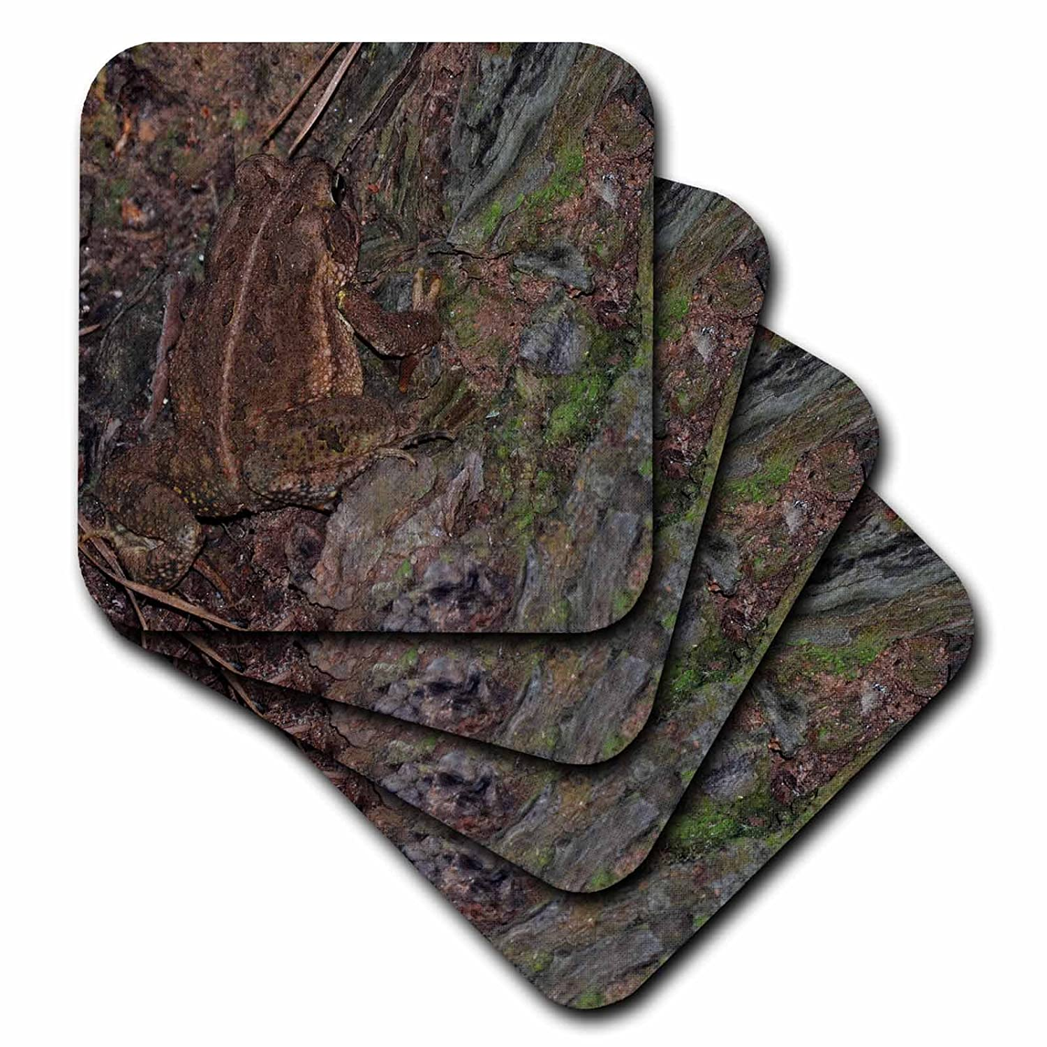 3dRose cst/_34570/_2 Brown Frog in Tree-Soft Coasters Set of 8