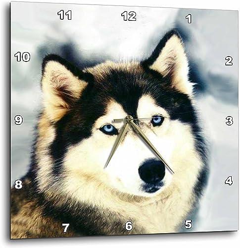 3dRose DPP_517_3 Staring Siberian Husky-Wall Clock, 15-inch, Multicolor