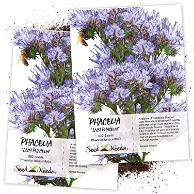 Seed Needs, Lacy Phacelia (Phacelia tanacetifolia) Twin Pack of 800 Seeds Each : Garden & Outdoor