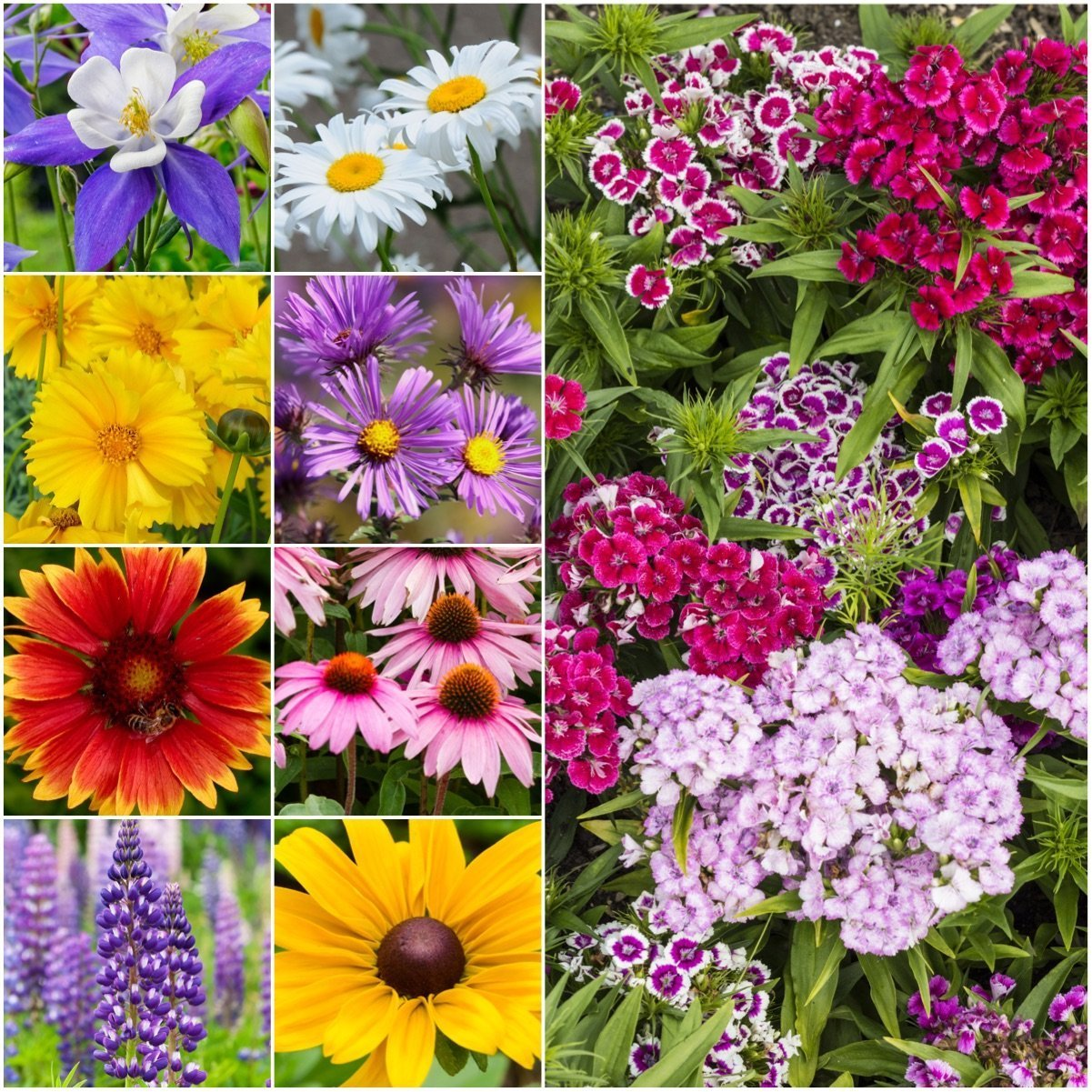 Package of 30,000 Seeds, Perennial Wildflower Mixture (100% Pure Live Seed) Non-GMO Seeds by Seed Needs best gardening gifts