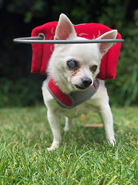 Muffin's Halo Blind Dog Harness Guide