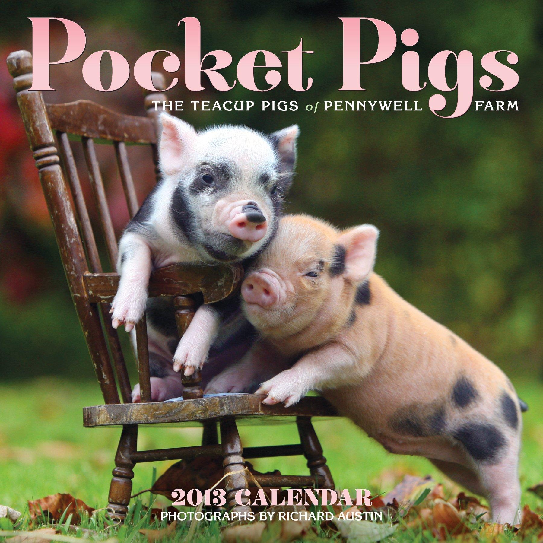 Amazon pocket pigs 2013 wall calendar the teacup pigs of amazon pocket pigs 2013 wall calendar the teacup pigs of pennywell farm 9780761167273 richard austin books voltagebd Choice Image