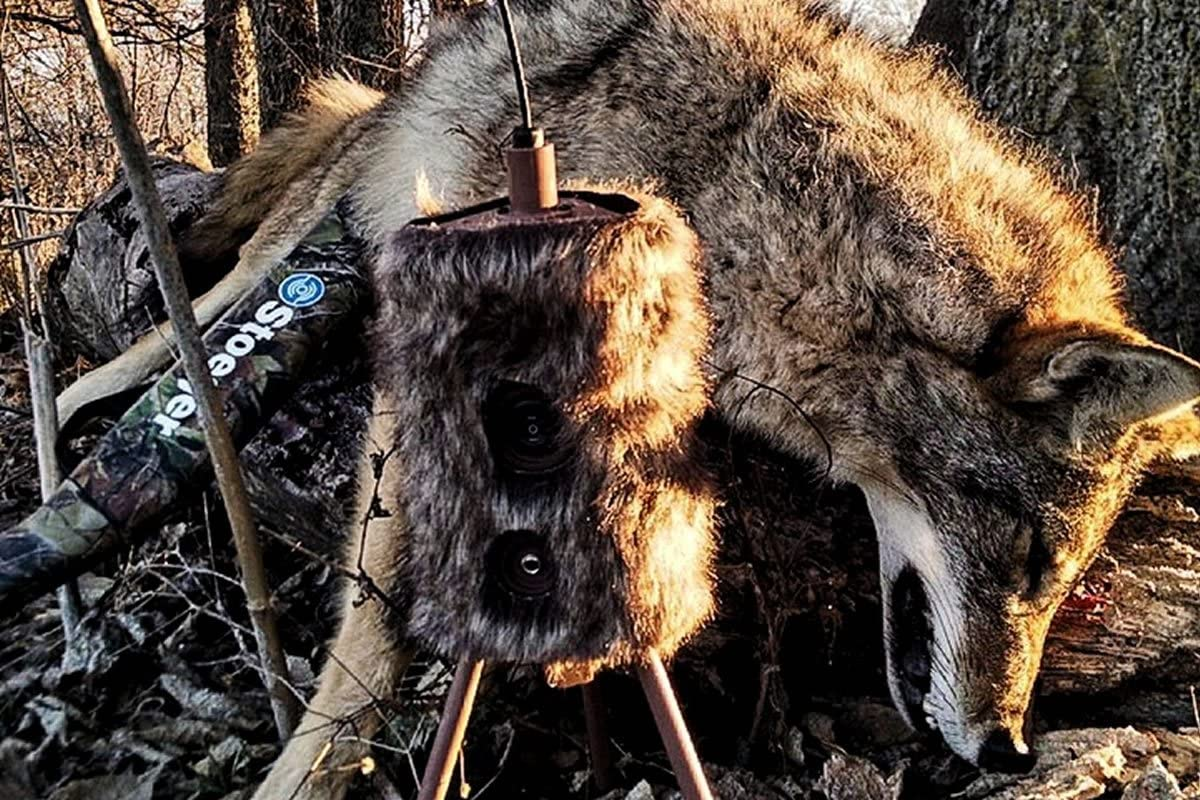 Mojo Hw2304 Outdoors Super Critter Predator Decoy Sound
