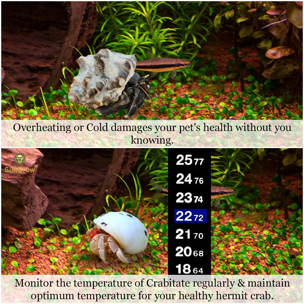Stick-on Thermometer for Hermit Crabs -- Provide Precise Temperature Measurement - Easy To Use and Install - Helps Keep Crabs Healthy & Live Longer