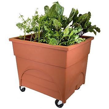 Amazon Com Emsco Group 2361d City Pickers Root Vegetable Raised