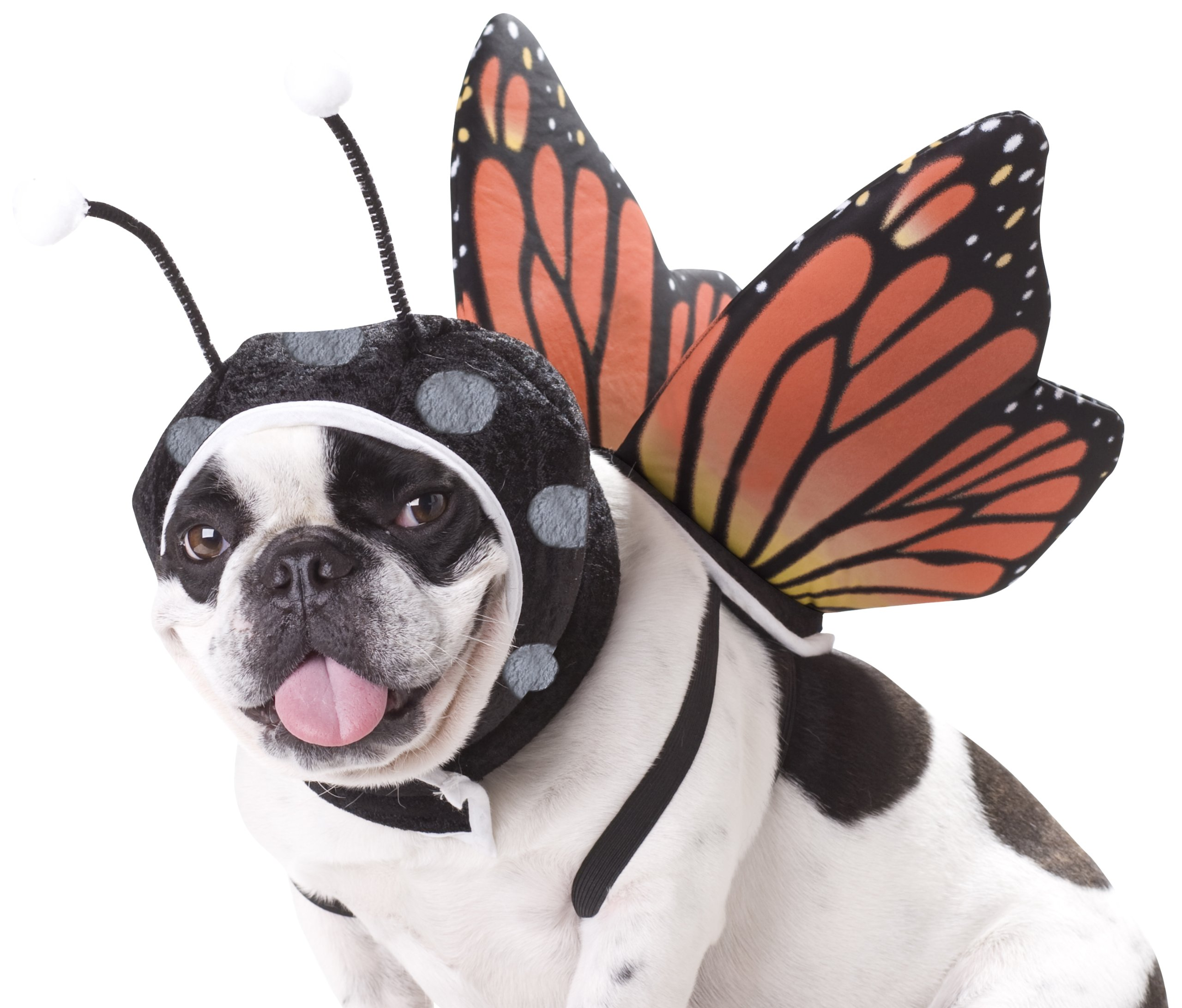 Animal Planet PET20101 Butterfly Dog Costume, Large