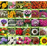 Creative Farmer Flower Seeds : Seeds For Vertical Garden And Horizontal Combo of 30 Packet of Seeds Garden Flower Seeds Pack By CreativeFarmer