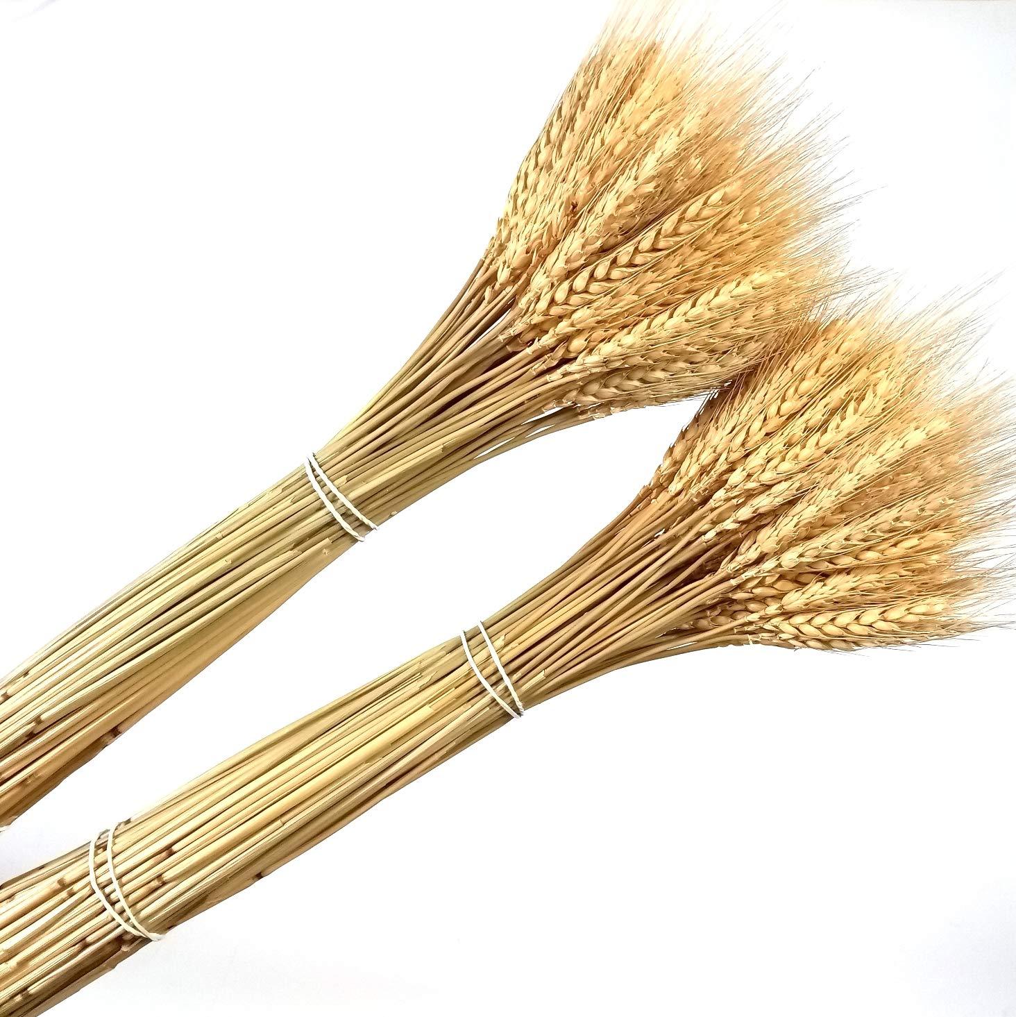 200 pcs séchées blé naturel Bundle Arrangement de fleurs Maison Table de fête de mariage Table Décoration 60cm de haut Dongliflower Arts
