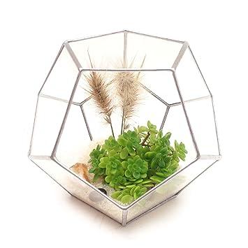 Dodecahedron Large Geometric Glass Terrarium Handmade Glass Planter