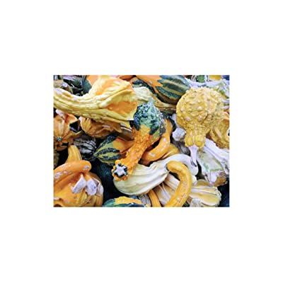 Autumn Wings Gourd (10 Seeds), A delightful array of winged and warted gourd : Garden & Outdoor