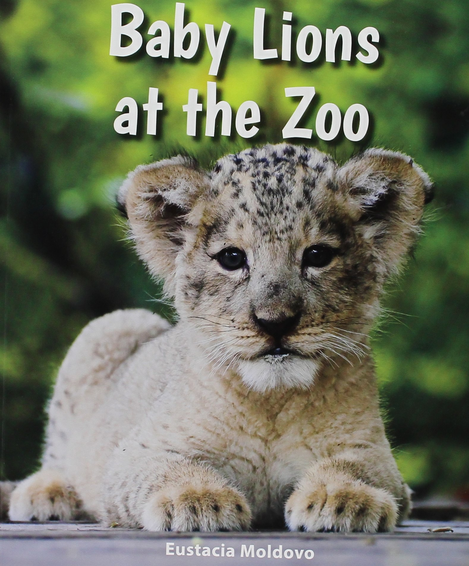 Read Online Baby Lions at the Zoo (All About Baby Zoo Animals) pdf