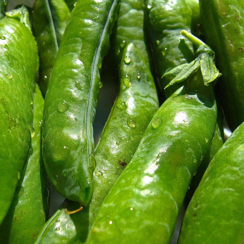 Sugar Ann Snap Pea Garden Seeds - 5 Lbs - Non-GMO, Heirloom Vegetable Gardening Seed