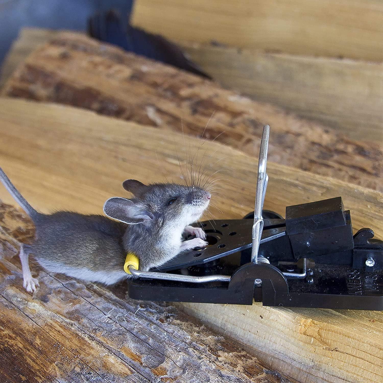 ratón atrapado con la rampa más vendida