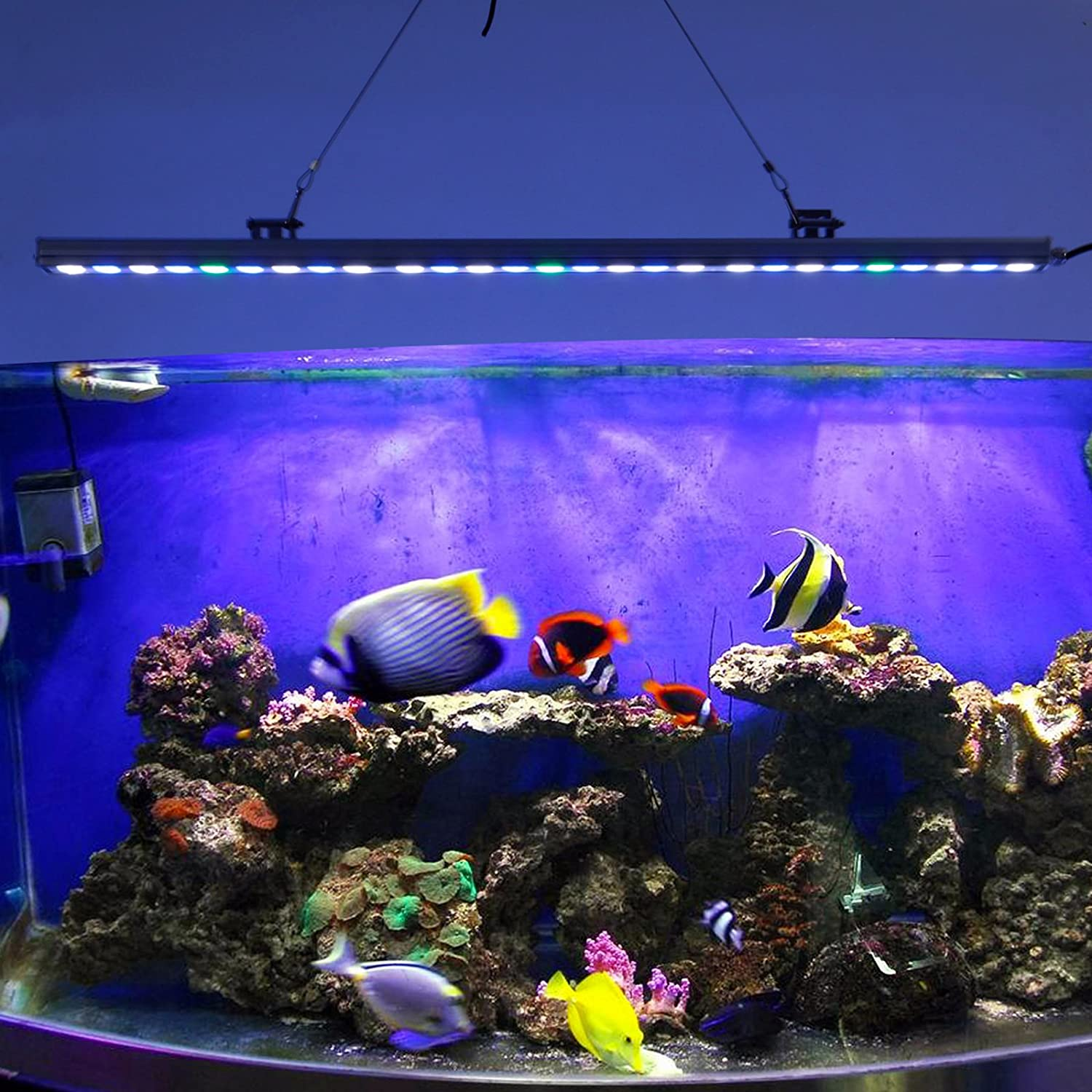 Freshwater fish and chip shop - Amazon Com Lightimetunnel Waterproof Led Aquarium Light Strip Saltwater Reef Coral Fish Tank Lighting Bar Pet Supplies