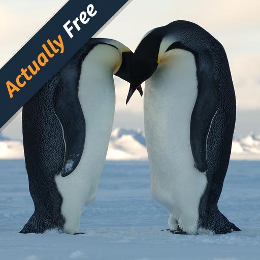 penguins-of-antarctica
