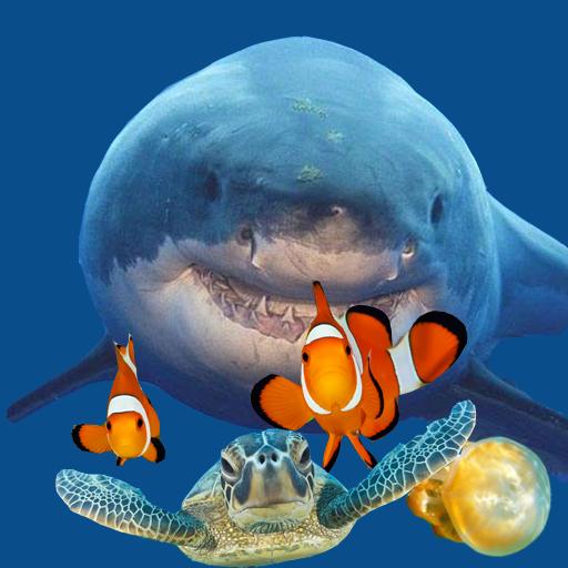 fish eat fish - 6