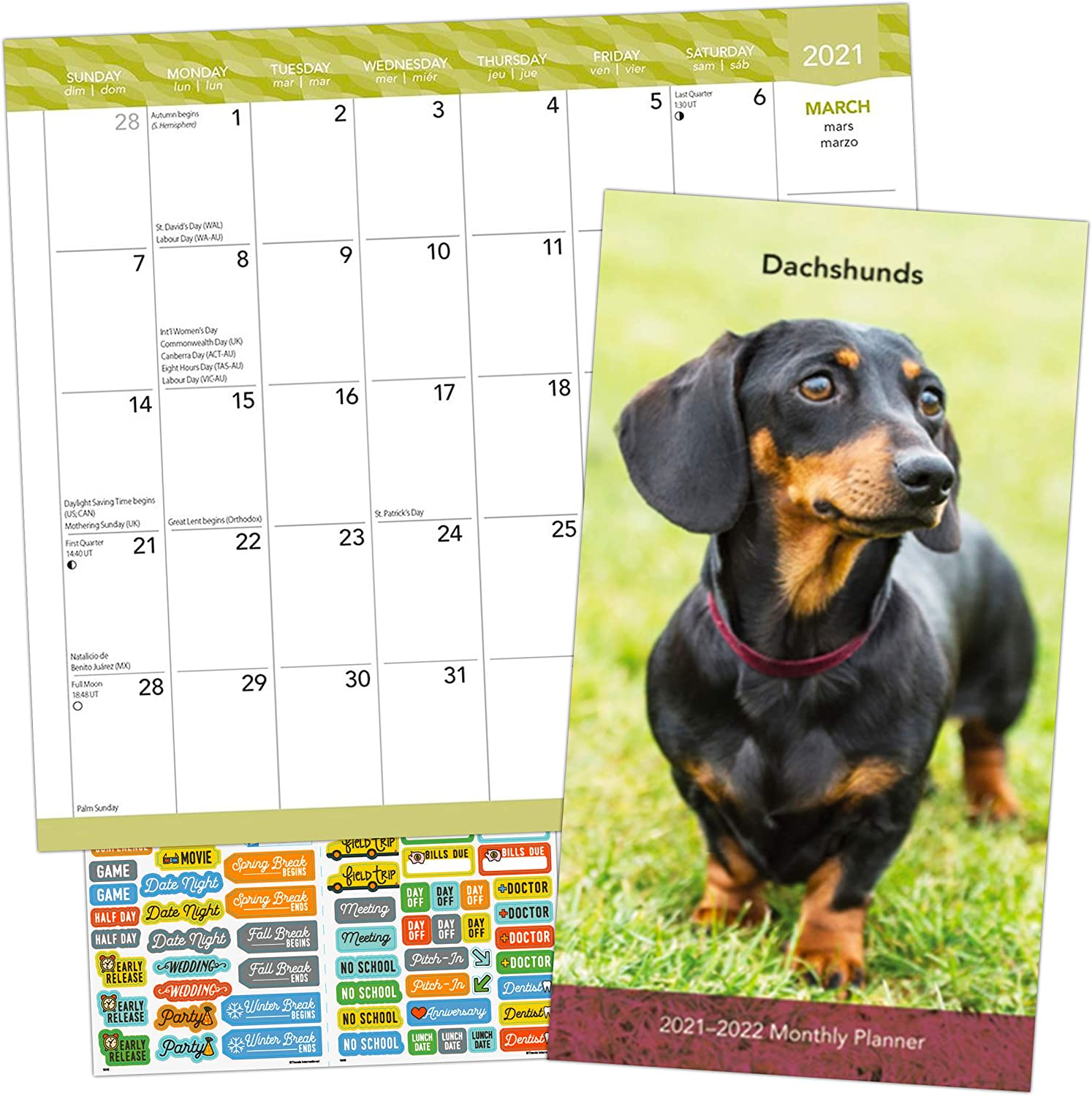 Dachshunds Calendar 2021 Bundle - Deluxe 2021 Wiener Dogs Pocket Planner Calendar with Over 100 Calendar Stickers (Dachshund Gifts, Office Supplies)