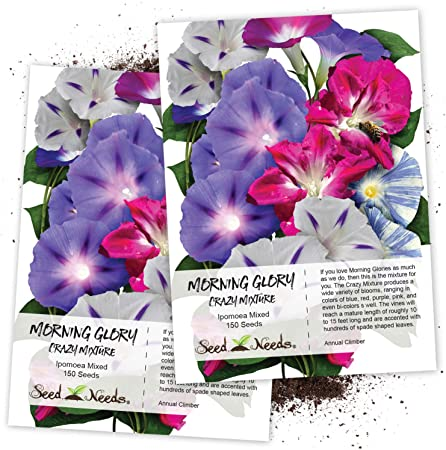 Flor Morning Glory Ipomoea abuelo Otts 250 semillas
