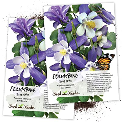 Seed Needs, Blue Star Columbine (Aquilegia caerulea) Twin Pack of 500 Seeds Each : Columbine Plants : Garden & Outdoor