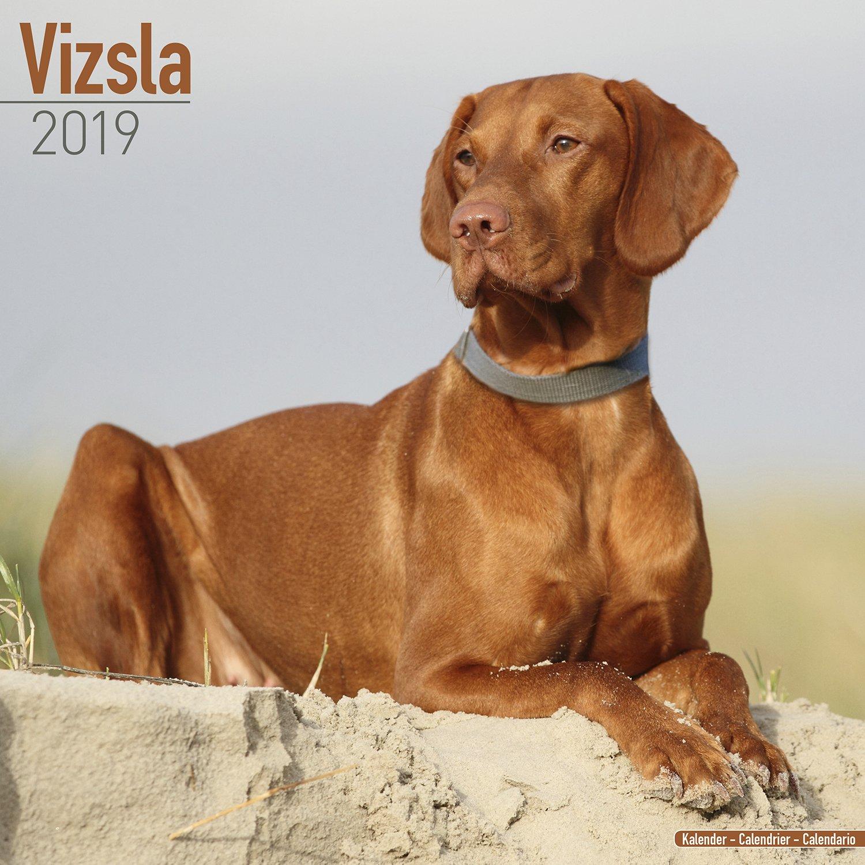 vizsla calendar dog breed calendars 2018 2019 wall calendars