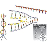 K'NEX Education – DNA Replication and Transcription Set – 525 Pieces – Ages 10+ Science Educational Toy