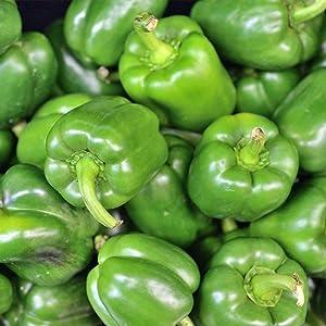 California Wonder 300 TMR Sweet Pepper Garden Seeds - 1 Lb Bulk - Non-GMO, Heirloom Vegetable Gardening Seed