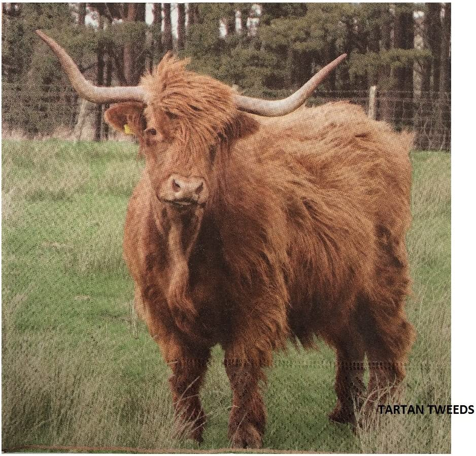 Design Luncheon Napkins New Heilan Coo Pack of 20 Scottish Highland Cow