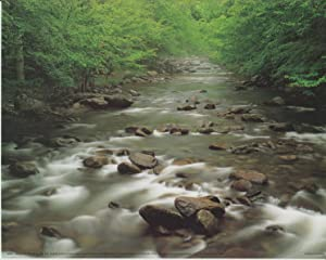 Great Smoky Mountain Middle Prong of the River National Park Nature Wall Decor Art Print Poster (16x20)