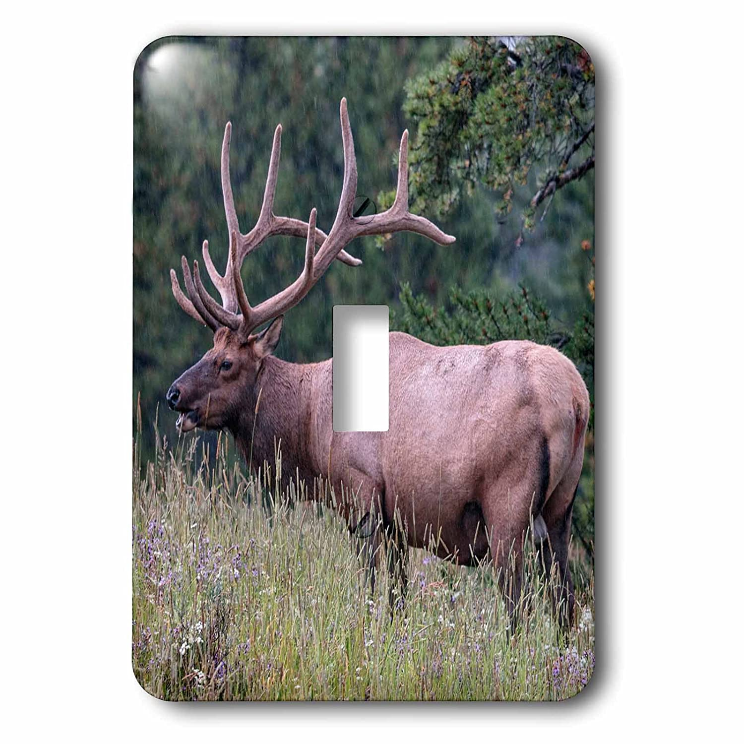 Yellowstone National Park Wyoming Toggle Switch 3dRose lsp/_279852/_1 Male Elk with Impressive Antlers Mixed