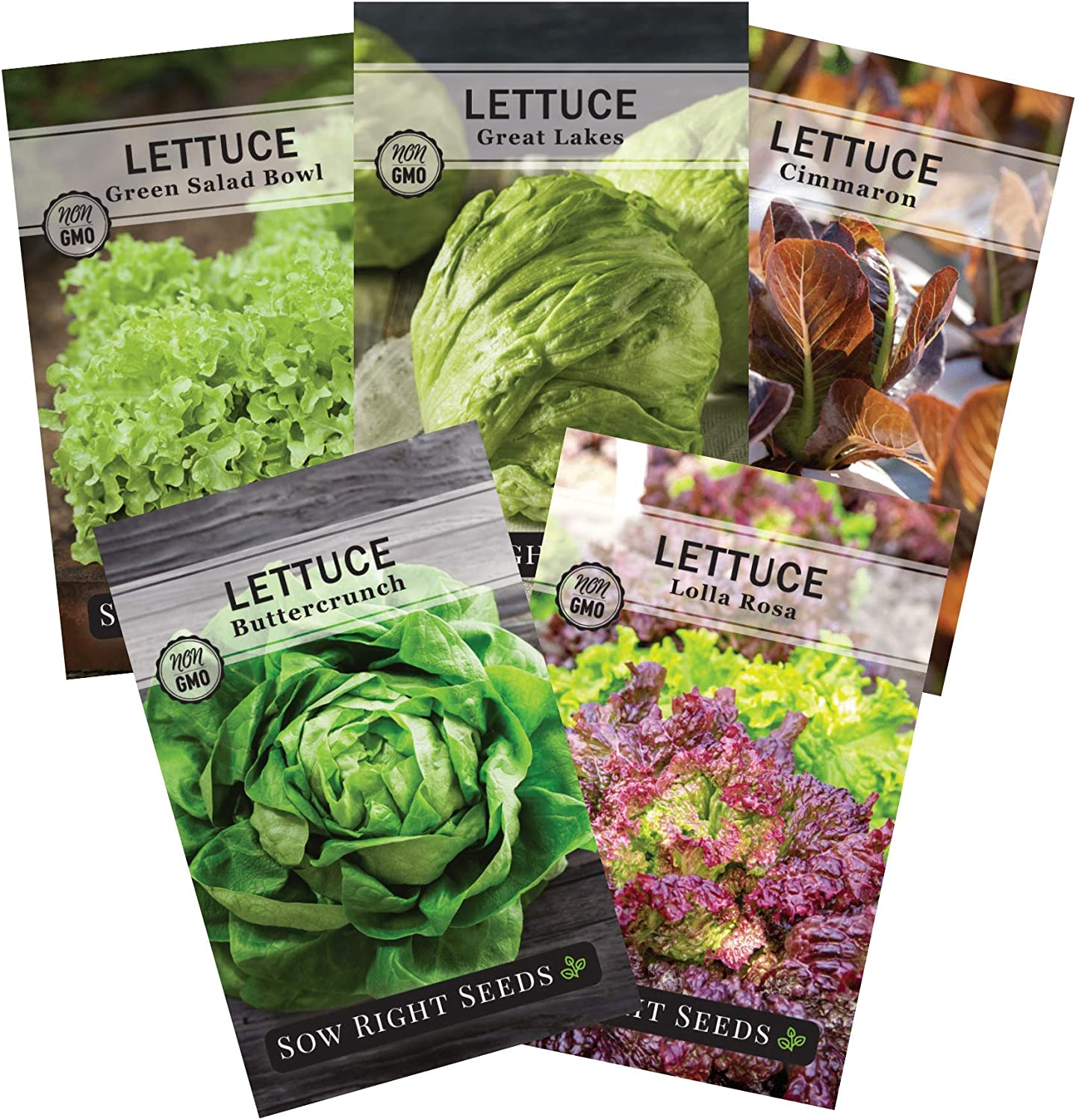 750 NON-GMO SEEDS Buttercrunch Lettuce Seeds