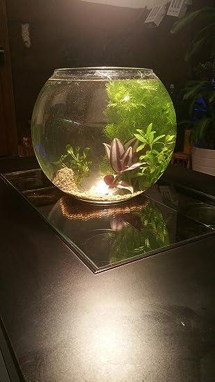 Camarones Acuario Juego completo con animales, Grava, plantas, Deko piedra Mini Mondi Biotop, vidrio, 20 cm: Amazon.es: Hogar