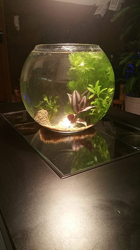 Camarones Acuario Juego completo con animales, Grava, plantas, Deko piedra Mini Mondi Biotop