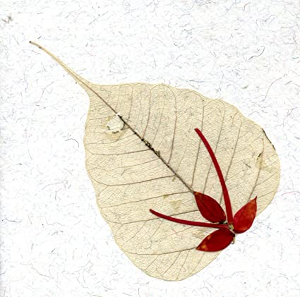 Amazon greeting card note card pressed flower on peepal leaf greeting card note card pressed flower on peepal leaf handmade paper card stock mightylinksfo